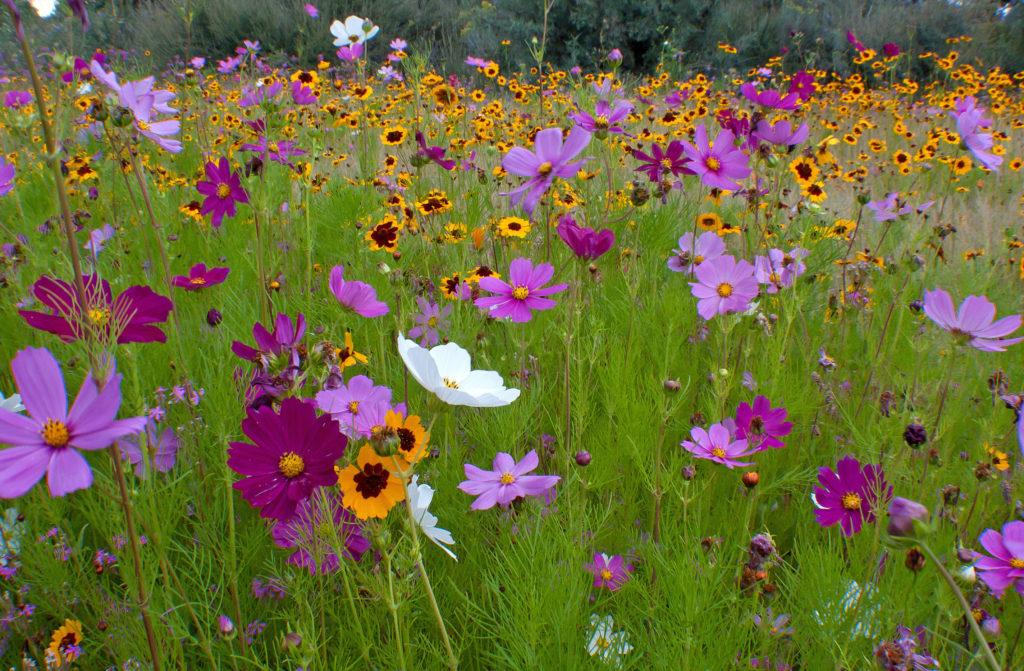 wildflowers_zkTpCvOO